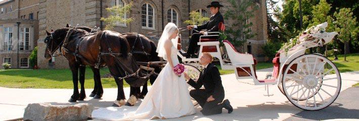 Организация и проведение свадьбы в Минске и Молодечно